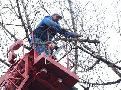 Leicester tree removal
