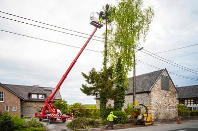 Tree Surgeons Leicestershire