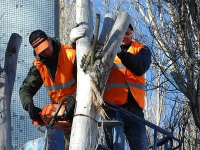 Tree care service Leicester