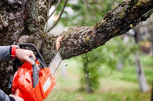 Tree surgeon services Leicester